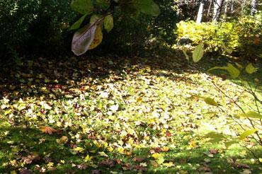 Lehdet putoaa
